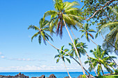 Beach with palm trees, Drake Bay, Corcovado National Park, Osa Peninsula, Costa Rica