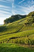 France, Jura, Chateau Chalon, vineyards on hillsides West
