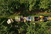 France, Tarn et Garonne, Sainte Thecle, Pierre Billard farm, producer of plums Queen Claude, certified red label, harvest, Aerial view