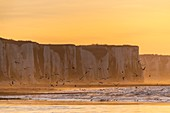 France, Somme, Bay of Somme, Picardy Coast, Ault, Twilight on the cliffs, presence of seabirds (seagulls)
