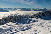 France, Haute Savoie, massive Bauges, above Annecy on the edge with the Savoie, the Semnoz plateau exceptional belvedere on the Northern Alps, view to the East and sea of clouds on the interior valleys