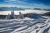 France, Haute Savoie, massive Bauges, above Annecy in border with the Savoie, the Semnoz plateau exceptional belvedere on the Northern Alps, snow landscape sculpted by the wind and sea of clouds