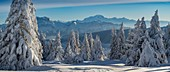 France, Haute Savoie, massive Bauges, above Annecy limit with the Savoie, the Semnoz plateau exceptional belvedere on the Northern Alps, panoramic view of the snow laden forest and massive Bornes and Mount White