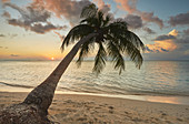 A shoreline coconut palm at sunset, on Havodda island, Gaafu Dhaalu atoll, in the far south of The Maldives, Indian Ocean, Asia