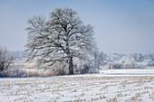 Winter landscape near Chieming am Chiemsee, Upper Bavaria, Bavaria, Germany