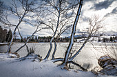 Snow-covered trees on the shore of Lake Bayersoien, Bad Bayersoien, Upper Bavaria, Bavaria, Germany