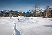 Winter landscape near the Geroldsee, Krün, Upper Bavaria, Bavaria, Germany