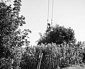 Little boy swings in the garden, plants, swing, Bavaria