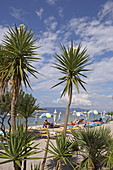 Palm trees on Meganisi Beach, Ionian Islands, Greece, Europe