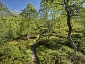 Hiking trail, Innerdalen, More og Romsdal, Norway