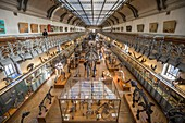 France, Paris, Jardin des Plantes, National Museum of Natural History, Galleries of Paleontology and Comparative Anatomy
