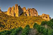 France, Vaucluse, Dentelles de Montmirail, vineyard of Gigondas