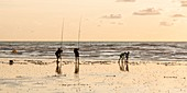 France, Somme, Ault, anglers on the beach of Ault as twilight settles down gradually