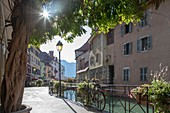 France, Haute Savoie, Annecy, old town on the Thiou river banks, Isle Quays, glow of the sun through a wisteria