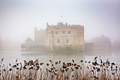 Foggy day in the park surrounding Leeds Castle, Kent, England, United Kingdom, Europe