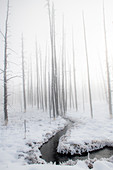 Snowscape with stream and trees in the fog, Yellowstone National Park, UNESCO World Heritage Site, Wyoming, United States of America, North America