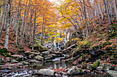 Autumn woods and waterfall in the background, Dardagna Waterfalls, Parco Regionale del Corno alle Scale, Emilia Romagna, Italy, Europe