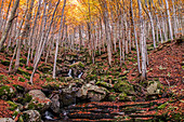 Foliage colors in the wood, Parco Regionale del Corno alle Scale, Emilia Romagna, Italy, Europe