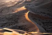 Sunset light on the sand dunes of Rub al Khali desert, Oman, Middle East