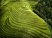 Aerial view of Longsheng rice terraces, also knows as dragon's backbone due to their shape, Guangxi, China, Asia