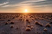Sunrise in Etosha savannah with small bushes projecting long shadows, Namibia, Africa