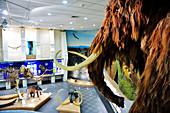 Mammoth Museum in Jakutsk, Yakutia: Jakutsk, ASIA, RUSSIA, SACHA, YAKUTIA, Republic of Sakha (Yakutia), River Lena