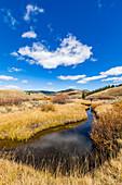 USA,Idaho,Stanley,Senior woman walking by stream among grass in non urban landscape