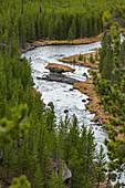 USA,Wyoming,Yellowstone National Park,Gibbon River among forest in Yellowstone National Park