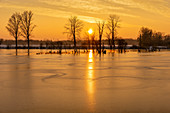 Sunrise over the wintry old Danube river near Wörth, Bavaria, Germany, Europe