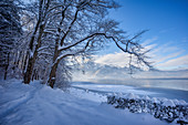 Winter morning at Kochelsee, Upper Bavaria, Bavaria, Germany, Europe