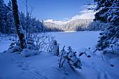 Winter at Untersee, Eibsee, Grainau, Bavaria, Germany, Europe