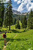 On the way to the Lösertaljoch through the Lösertal with a view of Scheinbergspitze and Lösertalkopf, Ammergau Alps, Bavaria, Germany, Europe