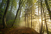 Morning mood in the beech forest in spring, Baierbrunn, Bavaria, Germany