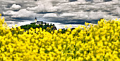 View of the Michaelsberg through a rape field after a thunderstorm, Siegburg, North Rhine-Westphalia, Germany