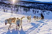 Hundeschlittentour bei Indset, Huskyfarm von Björn Klauer, Bardufoss, Norwegen
