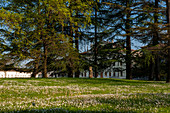 The Park of Villa Manin, a Venetian villa from the 1600s, with its 1600 trees, a green oasis in the Po valley in the province of Udine, Friuli Venezia Giulia.