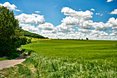 Cumulus clouds over summer fields in Burgbrohl, Rhineland-Palatinate, Germany