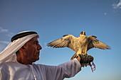 Würdevoller Araber hält Falke in der Hand, nahe Al Ain, Abu Dhabi, Vereinigte Arabische Emirate, Naher Osten