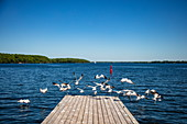 Seagulls fly from the jetty of Westport Marina on Big Rideau Lake, Westport, Ontario, Canada, North America