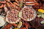 Eine köstliche Platte mit Meeresfrüchten, zubereitet von Chefkoch Boy Schuiling vom Restaurant 't Paakhuus Texel, wird an Bord des 1902 gebauten Segelschiff Iselmar während der Wattenmeerüberquerung von Harlingen nach Terschelling serviert, Westfriesische Inseln, Friesland, Niederlande, Europa