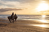 Two people ride galloping horses on the beach of the Westerduinen dunes along the North Sea coast at sunset, near Den Hoorn, Texel, West Frisian Islands, Friesland, Netherlands, Europe