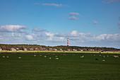 Schafe auf einer Wiese mit strohgedeckten Häusern und dem Leuchtturm von Ameland dahinter, nahe Hollum, Ameland, Westfriesische Inseln, Friesland, Niederlande, Europa