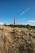Grasses and trees on sand dunes with Ameland lighthouse behind, near Hollum, Ameland, West Frisian Islands, Friesland, Netherlands, Europe