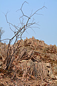 Angola; in the southern part of Namibe Province; Petrified wood hill