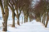 Winter avenue in the snowstorm, Georgshof, Ostholstein, Schleswig-Holstein, Germany