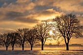 Winterimpression Baumallee im Morgenlicht, Georgshof, Ostholstein, Schleswig-Holstein, Deutschland