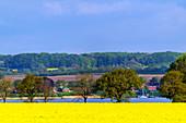 View of the Schlei to the Rapsbüte, Thumby, Schwansen, Schleiregion, Schleswig-Holstein, Germany