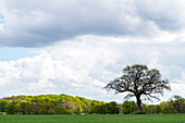 Solitaire kingdoms near Damp, Schlei region, Schwansen, Schleswig-Holstein, Germany