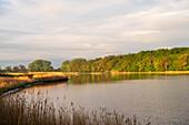 Morning mood, Geltinger Birk, Geltinger Noor, Baltic Sea, nature reserve, Geltinger Birk, Schleswig-Holstein, Germany