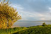 Morning mood in Geltinger Birk, Baltic Sea, nature reserve, Geltinger Birk, Schleswig-Holstein, Germany
